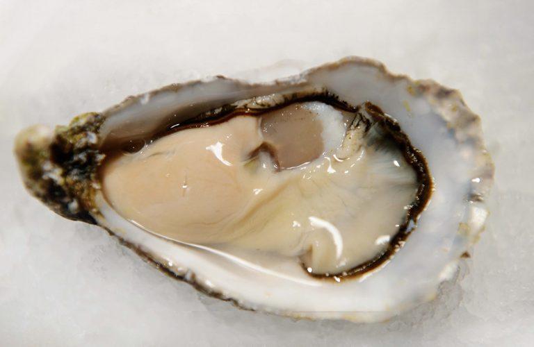 oester closeup 60x80 128dpi